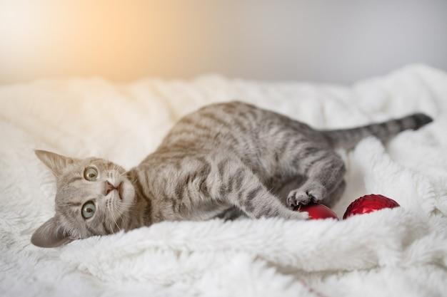 Il simpatico gattino tabby con gli occhi azzurri gioca con una palla rossa di giocattoli di natale su un plaid bianco nel...