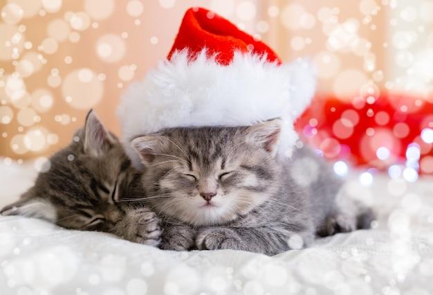 Simpatici gattini tabby che dormono insieme in cappello di natale con sfocatura neve luci cappello di babbo natale