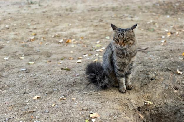 Simpatico gatto randagio soriano nel parco