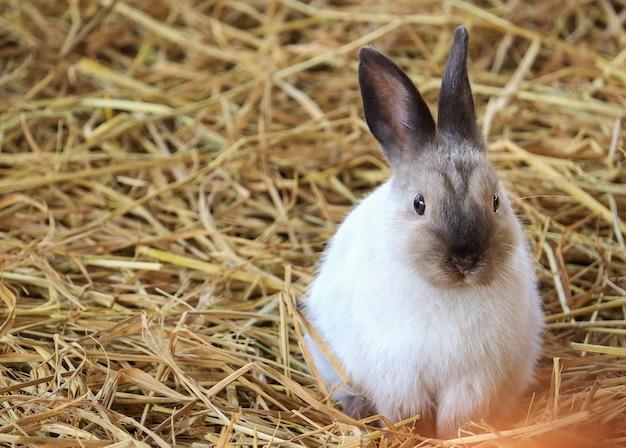 Coniglio marrone bianco sveglio sulla paglia