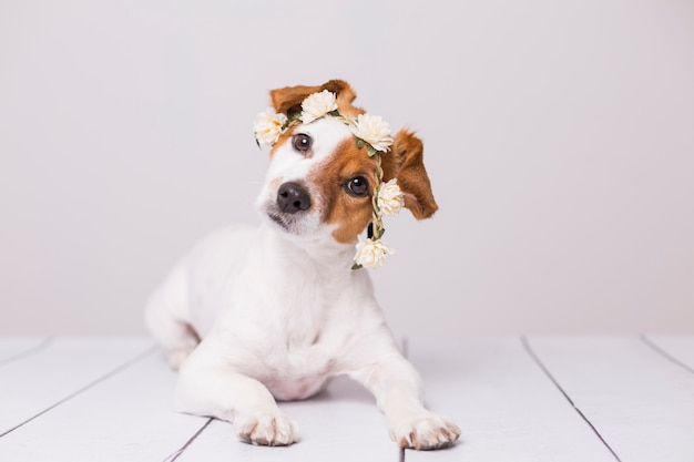 Piccolo cane bianco e marrone sveglio che indossa una corona di fiori bianchi