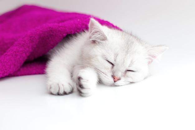 Gattino bianco sveglio che dorme in un asciugamano viola su una superficie bianca