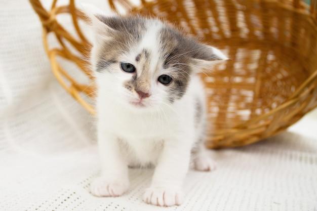 Piccolo gattino macchiato bianco sveglio vicino a un canestro di paglia di vimini