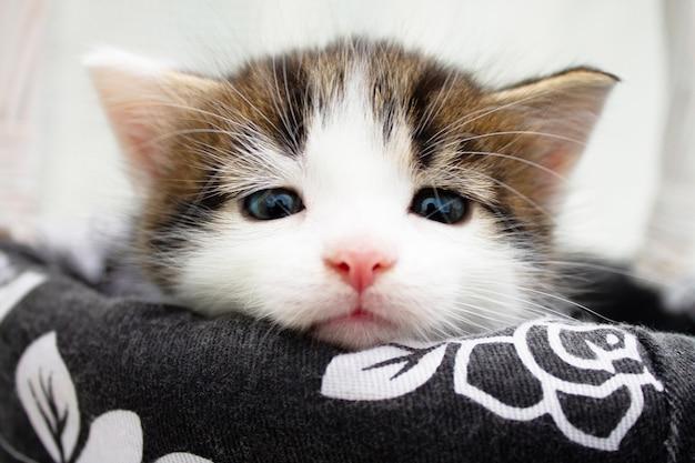 Piccolo gattino macchiato bianco sveglio in un canestro di paglia di vimini