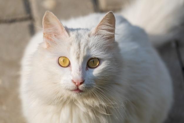 Simpatico ritratto di gatto randagio bianco