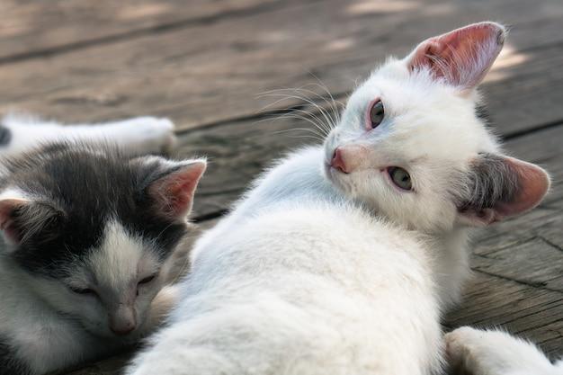 Simpatici gattini whiteblack che dormono insieme sulle tavole di legno all'aperto