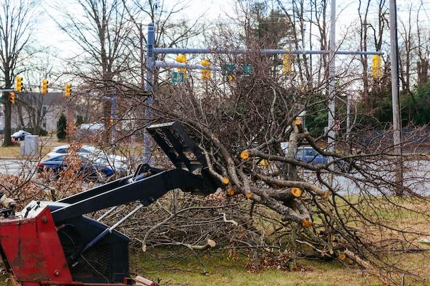 Taglia l'albero con la motosega, concetto di deforestazione.