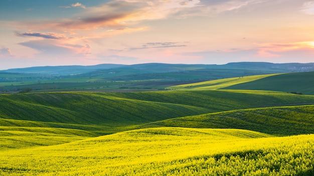 Repubblica ceca. moravia. cielo di tramonto sopra i campi di colza ondulati