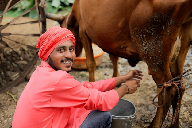 Un allevatore che munge la sua mucca nel suo caseificio locale, una scena agricola indiana.