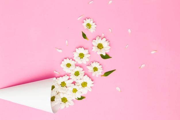 Margherite su sfondo rosa, il concetto di festa in una stagione minima. l'idea della fioritura della natura. composizione di fiori