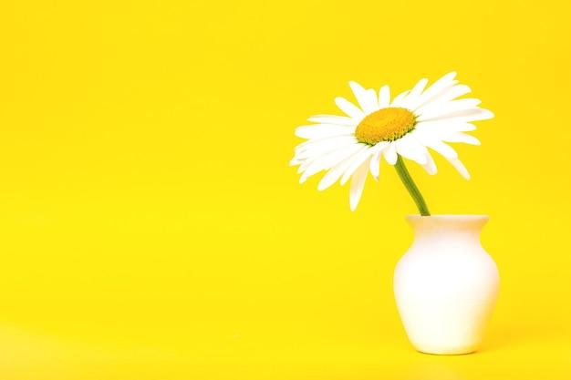 Fiore a margherita in una brocca bianca su sfondo giallo con un primo piano dello spazio della copia copy