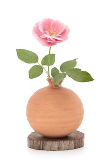 Fiore di rosa damascena in vaso isolato su sfondo bianco.