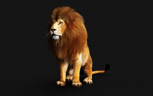 Lion pericoloso isolato sul nero, con il percorso di residuo della potatura meccanica