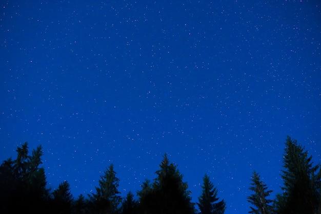 Pini di notte blu scuro sopra il cielo con molte stelle. sfondo della via lattea