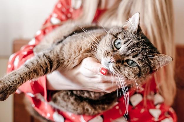 Gatto di pelliccia scuro sdraiato sulle mani femminili. chiudere gli animali domestici