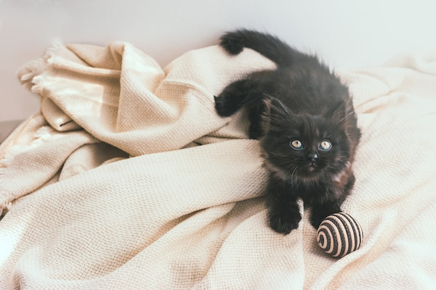 Il simpatico gattino grigio scuro giace su una coperta di cotone beige con una palla di iuta a strisce