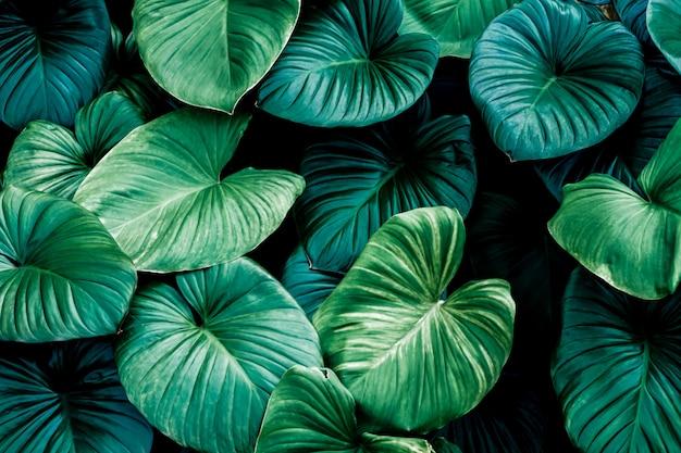 Foglia verde scuro nella natura tropicale della giungla
