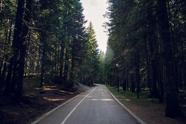 Strada pedonale buia mattina alla foresta in montenegro