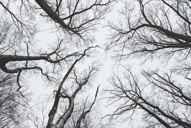 Alberi scuri, disposti in cerchio, senza foglie sul cielo scuro
