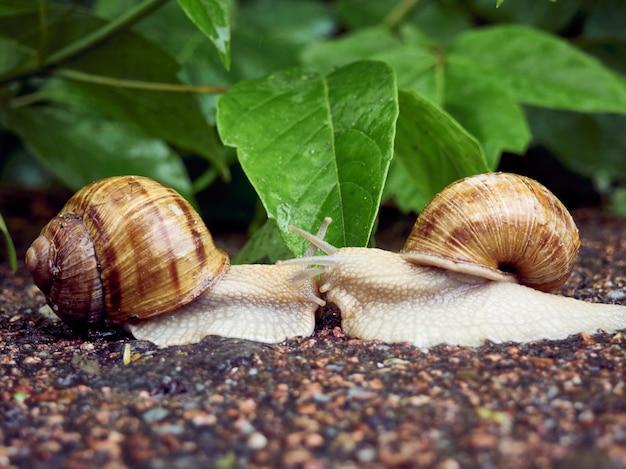 Data di due lumache su uno sfondo di foglie