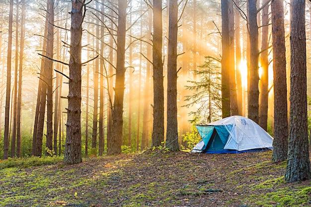 Alba in una foresta nebbiosa con una tenda solitaria. l'uomo vive nella foresta