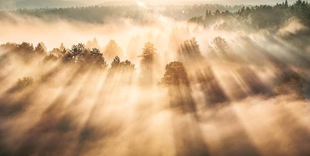 Alba in una foresta nebbiosa