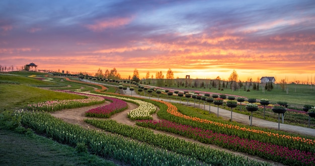 Alba nel parco, i tulipani sbocciano nei campi