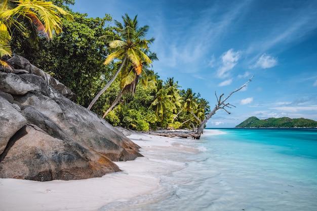 Gita di un giorno all'isola di therese. mahe, seychelles palme da cocco sulla spiaggia di sabbia tropicale appartata, laguna blu contro un cielo blu.
