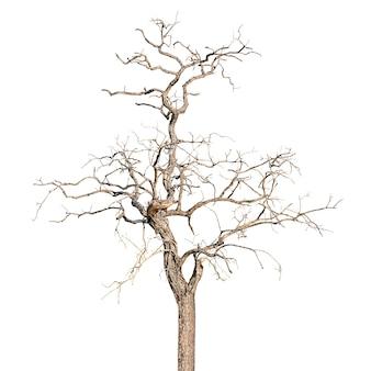 Albero morto e secco isolato in bianco