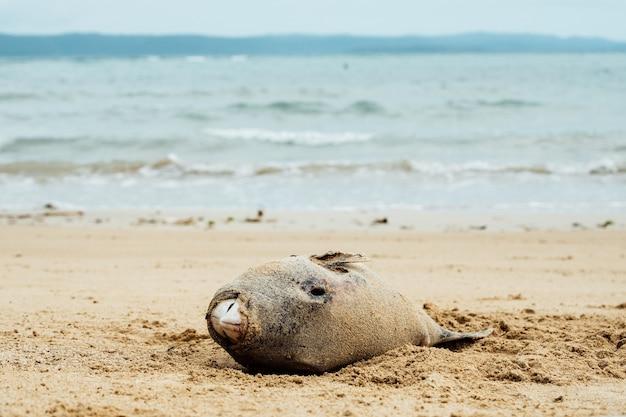 Pesce morto sulla spiaggia. inquinamento dell'acqua