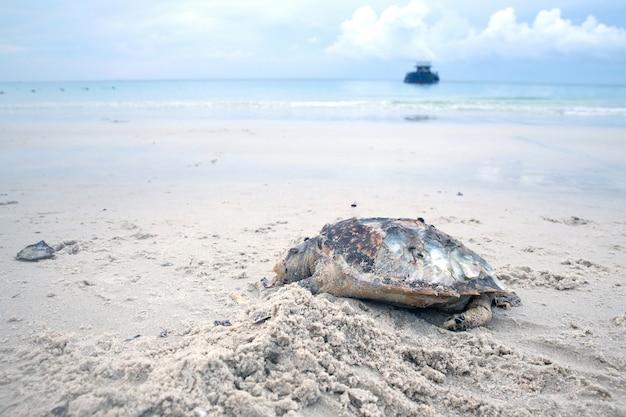 Corpo di tartaruga di mare morto sulla spiaggia di sabbia
