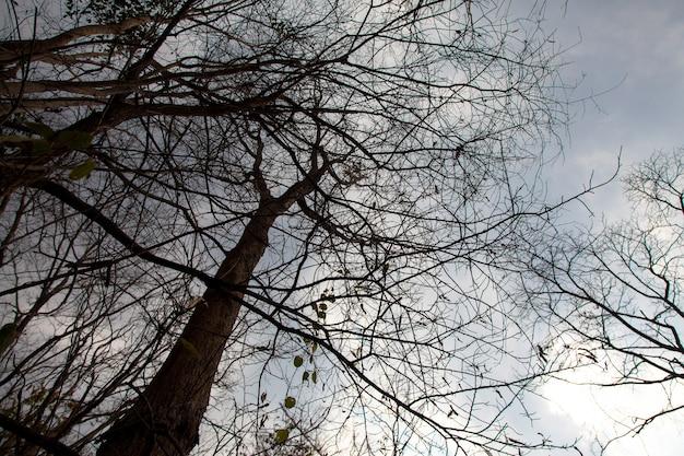Il cielo blu e le nuvole dell'albero in piedi morto.