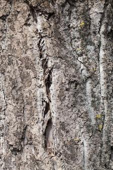 Tronco d'albero in decomposizione dagli effetti dei fenomeni naturali.