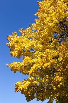 Foresta decidua durante la caduta delle foglie