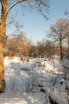 Alberi decidui coperti di neve e gelo in inverno