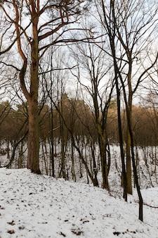 Alberi decidui senza foglie in inverno. sul terreno ci sono cumuli di neve dopo una nevicata