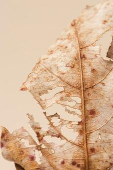 Macro shot di foglie marroni essiccate decomposte