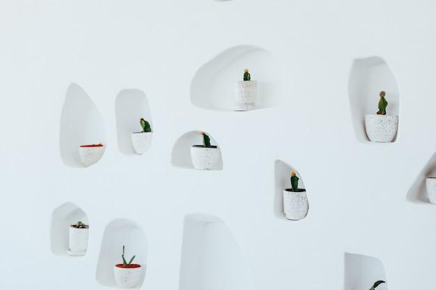 Decorazione di cactus isolato su muro bianco
