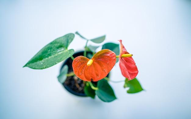 Decorazione pianta da interno