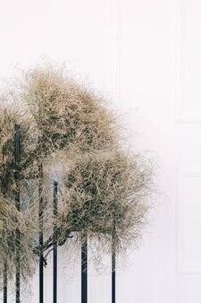 Decorazioni con fiori secchi vicino al muro bianco del soggiorno. dettagli interni