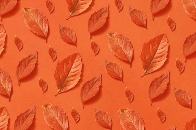 Sfondo colorato decorativo da foglie di arancio di diverse dimensioni e forme