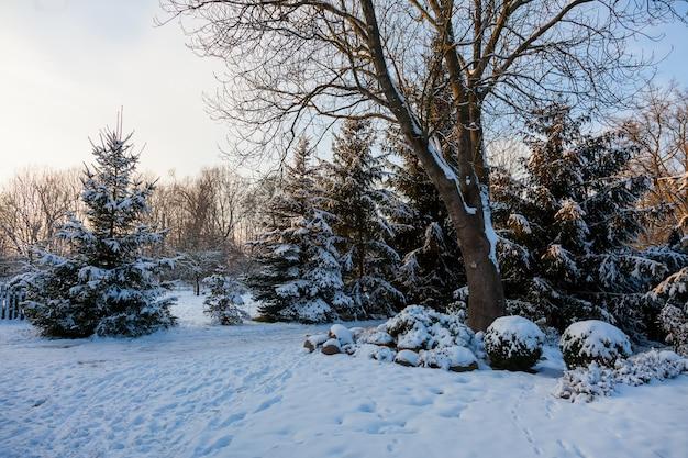 Giardino decorativo e alberi di pino in una neve in inverno, amante della slesia, polonia