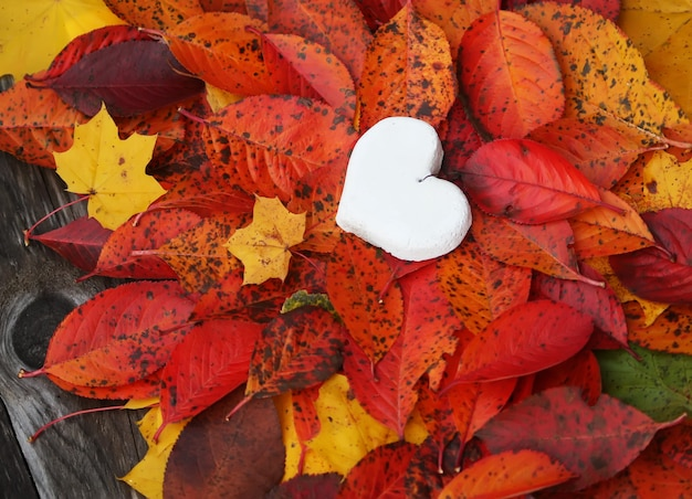 Cuore decorativo fatto a mano su foglie autunnali colorate