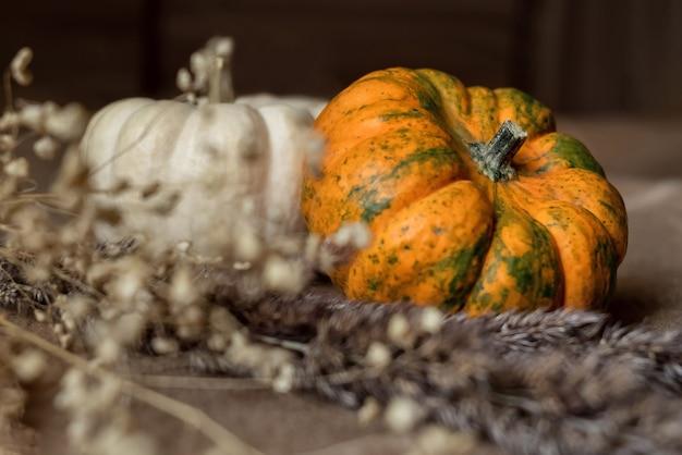 Zucche raccolte decorative con erba secca in primo piano. ringraziamento autunnale e superficie delle vacanze di halloween. messa a fuoco selettiva