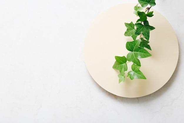 Vista dall'alto del ramo di pianta decorativa sul tavolo luminoso con spazio libero per il testo.