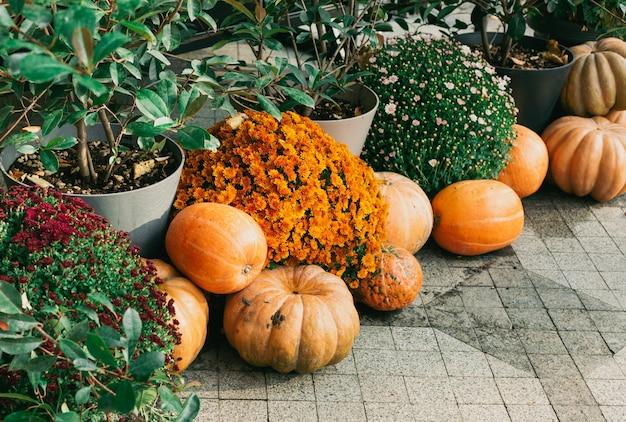 Zucche decorative fiori all'aperto e decorazioni di halloween all'aperto raccolta e decorazione del giardino