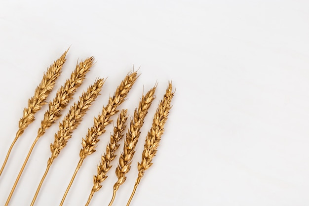Punte decorative di oro di grano colorate su luce. orecchie verniciate dorate di colore metallico. layout creativo con copyspace. raccolto ricco.