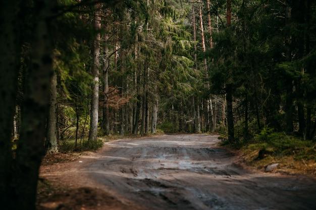 Foresta profonda con percorso. natura selvaggia con pinetrees. natura nordica.