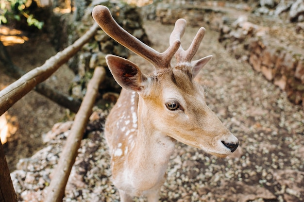 Riserva naturale aperta dei cervi nella roccia, zoo, riserva sull'isola di zante
