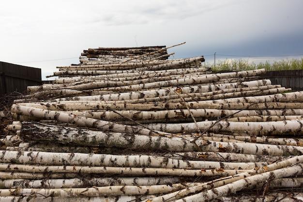 Deforestazione, distruzione della foresta. raccolta del legname. pila, pila di molti tronchi segati di pini e betulle. foto di alta qualità